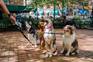 Four dogs in a park.