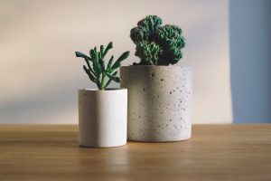 two potted plant - move with houseplants